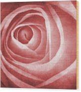 Textured Rose Macro Wood Print by Meirion Matthias