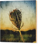 Textured Seedhead. Wood Print