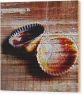 Textured Shells Wood Print