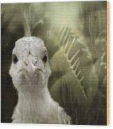 Th White Peacock Wood Print