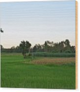 Thai Fields Wood Print