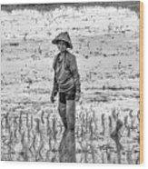 Thailand Rice Planter Wood Print