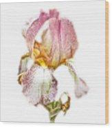 Thank You Greeting Items - Bearded Iris Wood Print