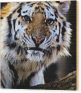 That Tiger Look Wood Print