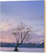 That Wanaka Tree Wood Print