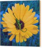 Imaginary Flower Wood Print