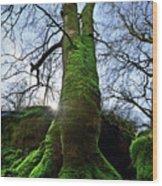 The Acteon Wood Print