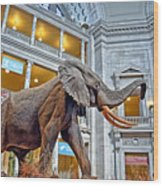 The African Bush Elephant In The Rotunda Of The National Museum Of Natural History Wood Print