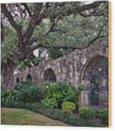 The Alamo Oak Wood Print