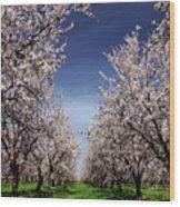 The Almond Bloom Wood Print