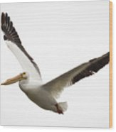 The Amazing American White Pelican Wood Print