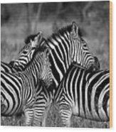 The Amazing Shot Of Zebra Wood Print