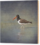 The American Pied Oystercatcher By Darrell Hutto Wood Print