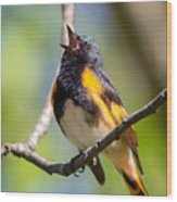 The American Redstart Wood Print