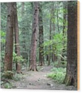 The Ancient Hemlock Forest Wood Print