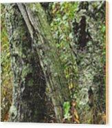 The Ancient Landmark Wood Print