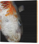 The Ancient One . Koi Fish . 7d5486 Wood Print