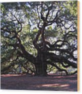 The Angel Oak In Charleston Sc Wood Print