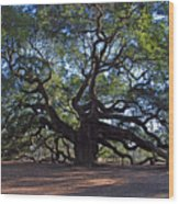 The Angel Oak In Spring Wood Print