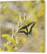 the Anise Swallowtail  feeding in the trees Wood Print