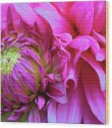 The Anticipation Of Dahlia 3 Wood Print