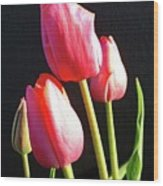 The Appearance Of Spring - Tulips Wood Print