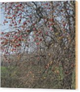 The Apple Tree Wood Print by Danielle Allard