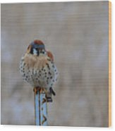 The Art And Image Of Kestrel Wood Print