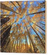 The Aspens Above - Colorful Colorado - Fall Wood Print
