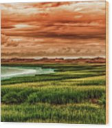 The Atlantic White Cedar Swamp Trail Wood Print