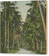 The Avenue Of Palms Guam Li Wood Print