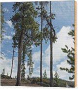 The Awakening Of New Land Wood Print