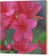 The Azalea Wood Print