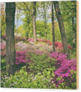 The Azalea Woodland Wood Print