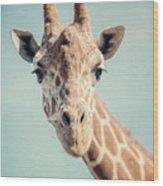 The Baby Giraffe Wood Print