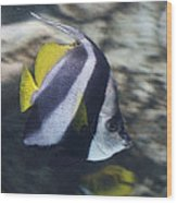 The Bannerfish Wood Print