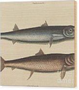 The Barracuda (esox Barracuda) Wood Print