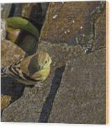 The Bath - American Goldfinch - Spinus Tristis Wood Print