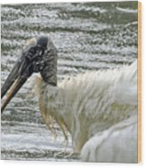 The Bathing Wood Stork 2 Wood Print