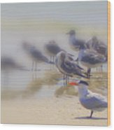 The Beak Wood Print
