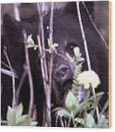 The Bearcub And The Dandelion Wood Print