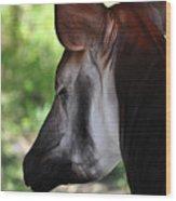 The Beautiful Okapi 01 Wood Print
