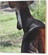 The Beautiful Okapi 02 Wood Print