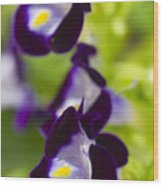 What's Wrong With Being A Pansy? Wood Print