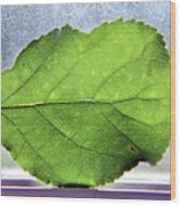 The Beauty Of A Leaf Wood Print