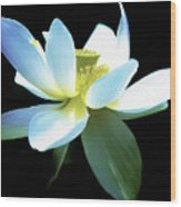 The Beauty Of A Lotus Wood Print