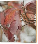 The Beauty Of Fall Wood Print