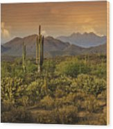 The Beauty Of The Sonoran Desert  Wood Print