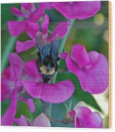 The Bee And The Flowers Wood Print