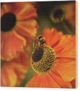 The Bee And The Helenium Wood Print